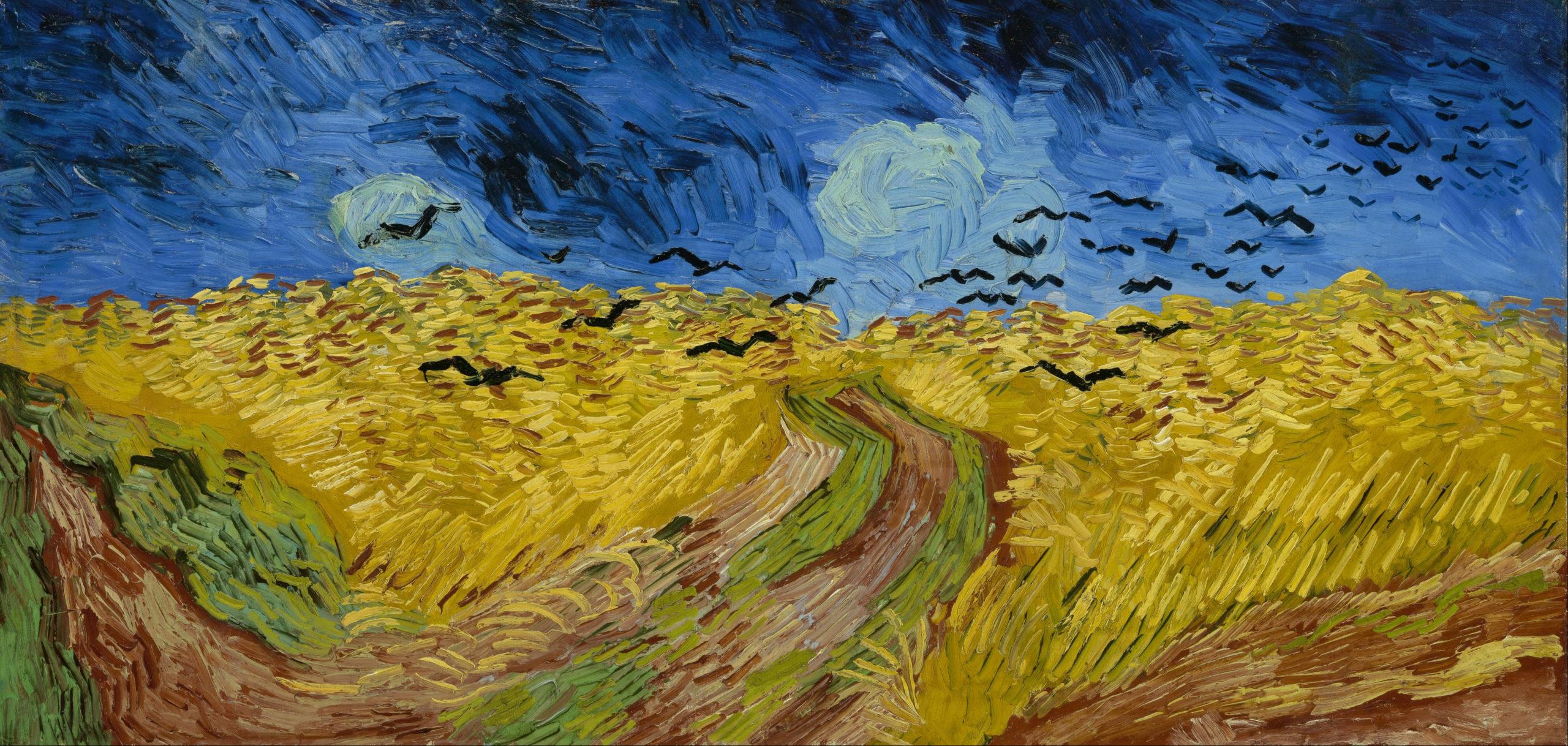 Campo di grano con voli di corvi