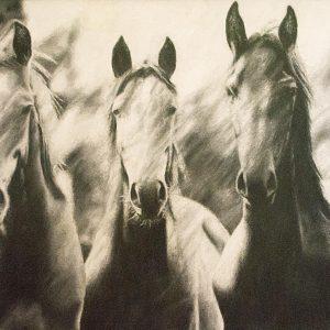 Patrick Pioppi - Horses