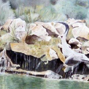 Il coccodrillo dei giardini della Mortella (Ischia) - Acquarello - 76x56cm